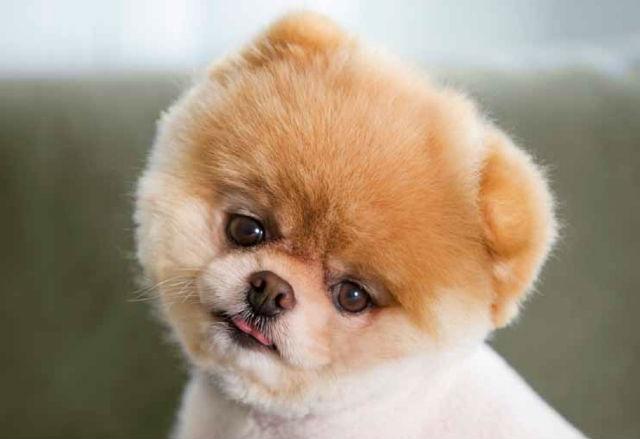 Nome de cachorro de famosos e celebridades